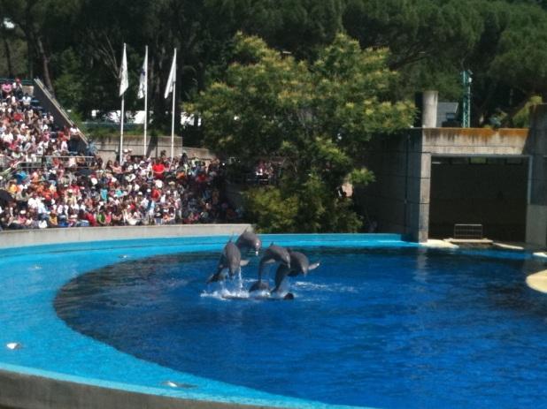 Cuatro de los Delfines del ZOO-Acuario de Madrid saltando durante la Exhibición